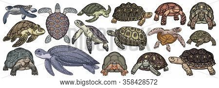 Sea Turtle Vector Cartoon Set Icon. Vector Illustration Tortoise On White Background. Isolate Cartoo