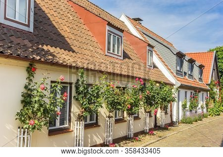 Pink Roses In Front Of Historic Houses In Holm Village, Germany