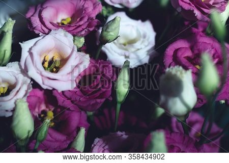 Pink Rose Flowers Background. Flower Close Up Background. Flowers For Postcard And Home Decoration.