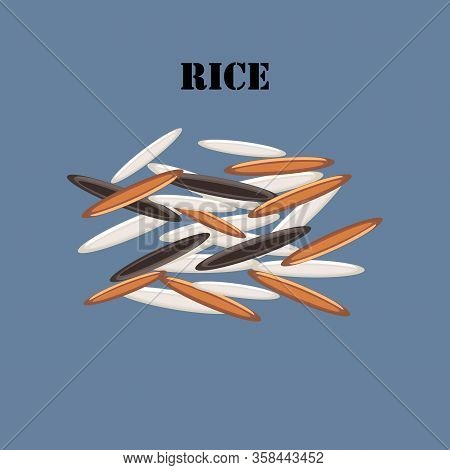 Rice Grain Healthy Organic Nutrition Vector Illustration
