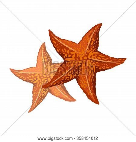 Orange Starfishes Or Sea Stars Are Star-shaped Echinoderms, Marine Invertebrates Having Central Disc