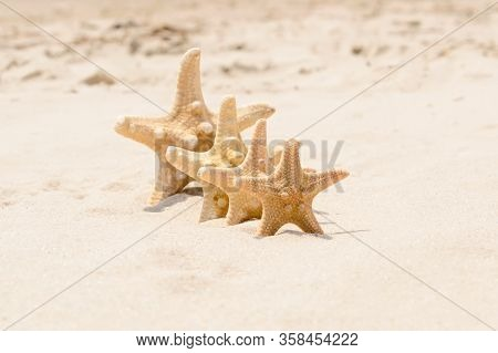 Big And Small Starfish On A Beach. 4 Sea Stars Standing In Row On Golden Sand Near Sea On Sunny Day.