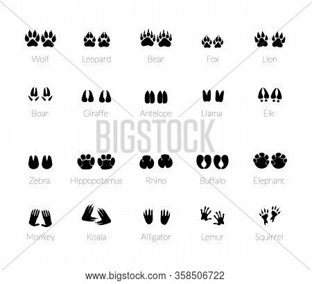Animals Footprints, Paw Prints. Set Of Different Animals And Predators Footprints And Traces. Cat, L