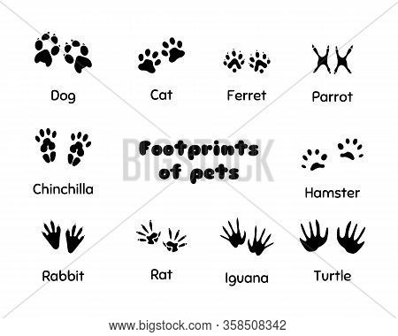 Footprints Of Animals. Animal Legs Silhouette, Wolf Footprint And Prints Of Pets Silhouettes. Wild A