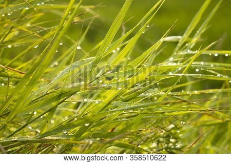 Abstract Nature Image Of Green Grass With Sparkling Dewdrops And Sunlights Close Up