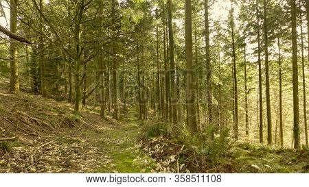 Forest Landscape. View Of The Forest Of Dean. Monmouthshire, Uk
