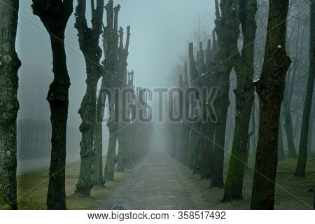 Misterious Gray Landscape With Misty Tree Alley.