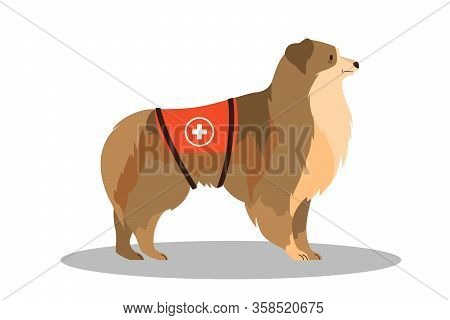 Dogs Rescuer, Collie. Cadaver Dog For Finding People.