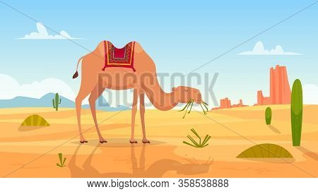 Desert Background. African Landscape With Group Of Camels Outdoor Wasteland Vector Cartoon Picture.