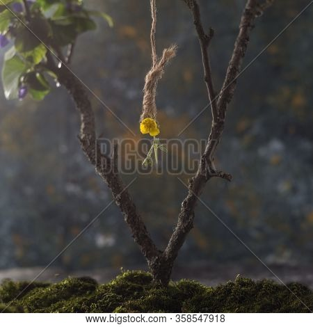 Close Up, Still Life Concept, Yellow Flower Hanging From A Tree On A Hanging Loop. Suicide Concept.