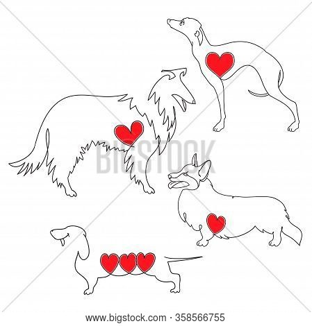 Set Of Four Different Dog Breeds. Corgi, Dachshund, Collie And Greyhound. Hand Drawn Vector Linear I