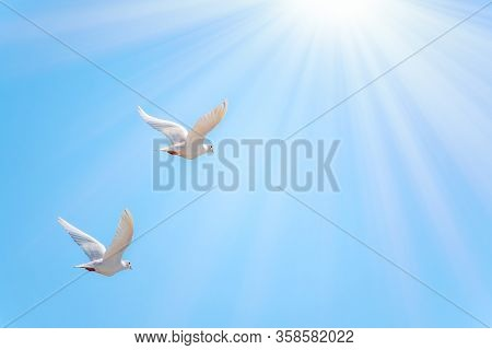 Two White Doves Fly In A Clear Blue Sky. Two White Doves Fly In The Sun. White Doves Are Used As Sym