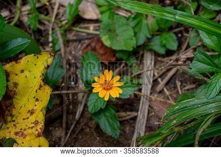 Flor Amarela Em Meio às Folhas Verdes