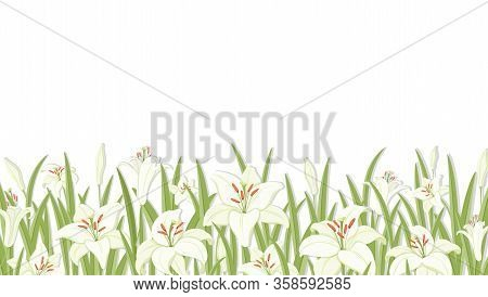 Lilys. Flower Background. White Lilies With Green Foliage. Symbol Of Easter, Spring And Love. Templa