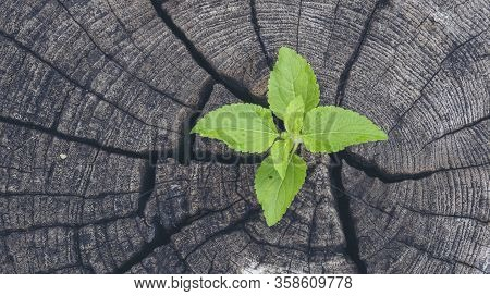 Green Tree Growing New Life Leaf On Rotten Wood Stump Wall Green Leaves Of Palm Tree Fresh Plant Tex