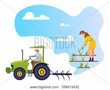 Woman Gardener Weeding Garden Bed. Farmer Growing, Planting And Caring Of Plants In Greenhouse Or Ra
