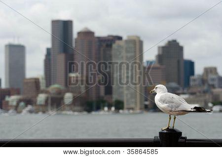Blurry Boston