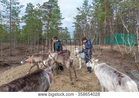 Two Women Feed Reindeer., Sami, Saami Village On The Kola Peninsula, Russia. Tourist Ethnographic Pa