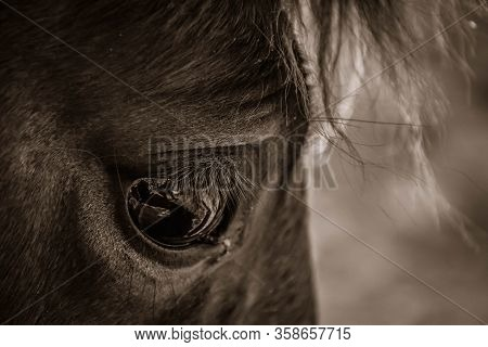 Brown Horse, Horse Eye Close Up, Macro Shot Of Horse Eye, View Of A Horse