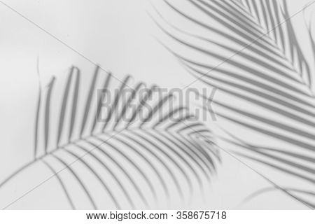 Abstract Background Of Shadows Palm Leaf On A White Wall. White And Black.