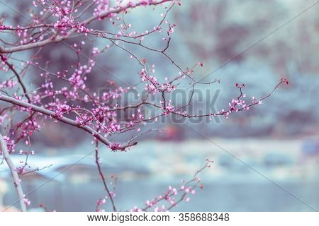 Delicate Branches With Pink Flowers On A Blurry Background. Moody Landscape. Romantic Floral Backgro