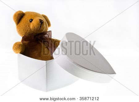 The little bear from the box