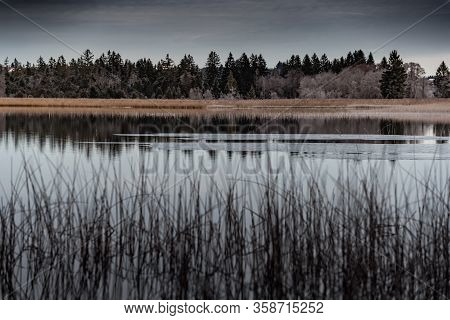 Landscape Of A Specular Reflection In The Lake, A Dry Grass, A Cane And Snags In The Foreground, Mou