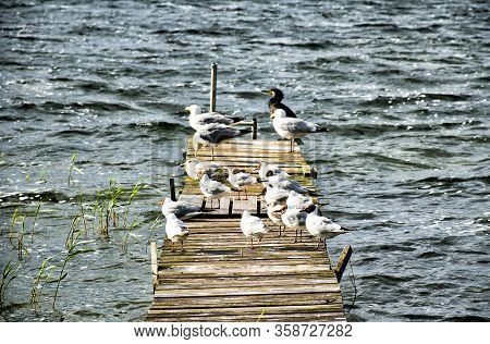 Birds Rest On A Small Jetty At Lake Fleesensee In Mecklenburg-western Pomerania (germany)