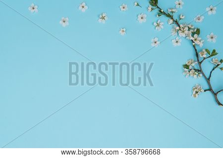 Photo Of Spring White Cherry Blossom Tree On Blue Background. View From Above, Flat Lay, Copy Space.