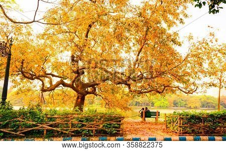Young Couple Sitting In A Park Bench. Two People Falling In Love In Natural Parkland. Maple Leaf Gar