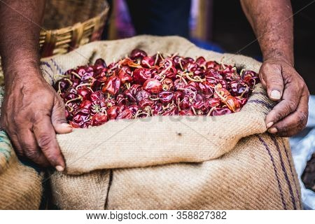 Dried Red Chilli Peppers. Old Man Hands Holding A Big Handful Of Spicy Red Chilli On Red Chilli Back