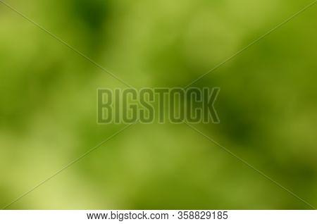 Natural Green Leaves Bokeh Background. Summer Defocused Organic Greens. Shining Under The Spring Sun