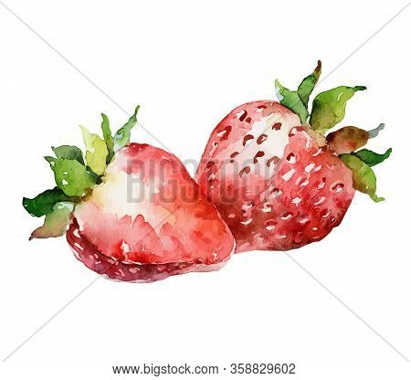 Watercolor Ripe Red Strawberry Isolated On White Background. Vector Illustration