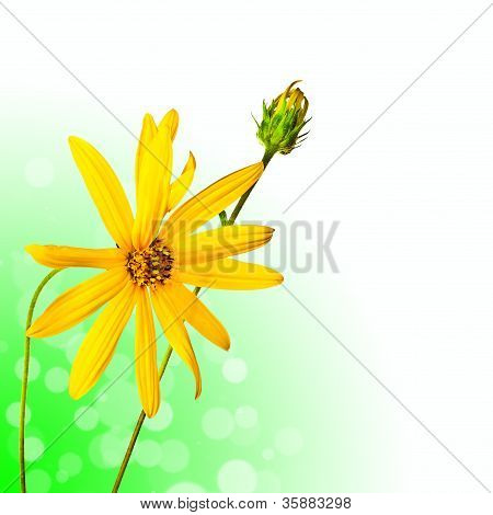 Beautiful Summer Flower