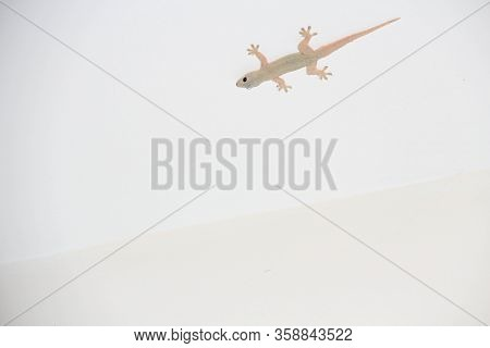Сute Little Lizard On A White Background