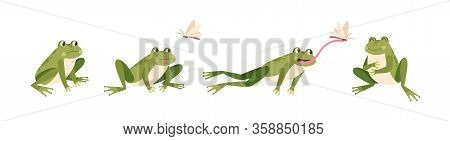 Set Of Cartoon Hungry Frog Sad, Smile, Resting And Hunting Isolated On White Background. Funny Toad
