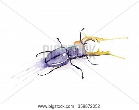 Watercolor Drawing Of An Insect - Stag Beetle, Stag