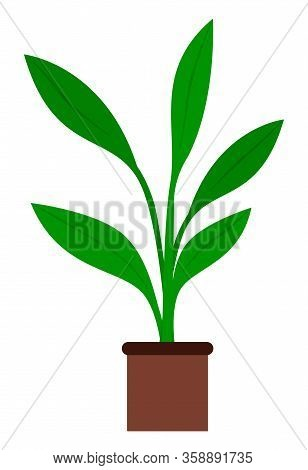 Houseplant With Big Green Leaves And No Stem, Vegetation In Brown Pot. Plant That Grown Indoor In Po