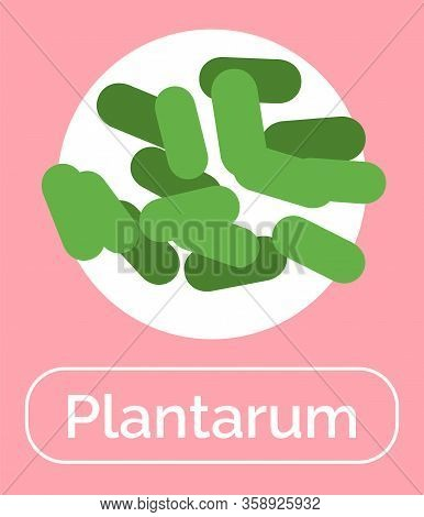 Plantum Bacteria For Positive Effect For Human Digestive System. Probiotics For Healthy Digestion An