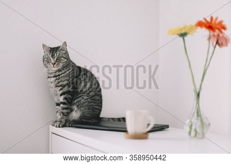 Cat Portrait. Cute Cat Indoor Shooting. Home Pet Cute Kitten Cat With Funny Looking Close Up Photo.