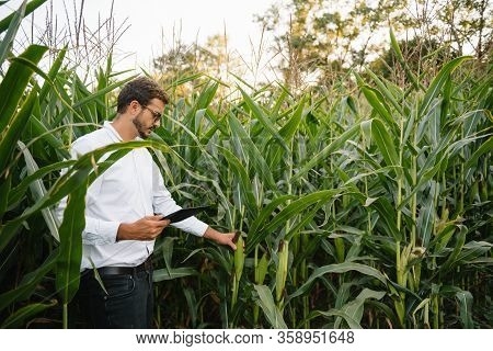Young Agronomist Holds Tablet Touch Pad Computer In The Soy Field And Examining Crops Before Harvest