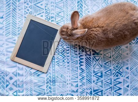 Rufus Rabbit On Blue Printed Cloth With Blank Chalk Board Sign To Add Text Flat Lay