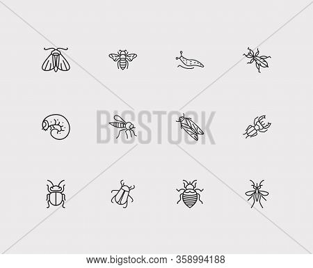 Insect Icons Set. Bee And Insect Icons With Cicada, Slug And Bedbug. Set Of Stinging For Web App Log