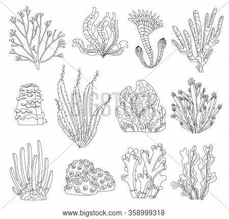 Marine Algae, Ocean Seaweed And Corals Silhouettes. Underwater Algae. Aquarium Plants Collection. Ve
