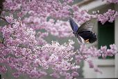Rescue operations for adv or others purpose use poster