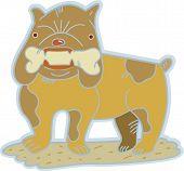 A British bulldog holding a bone in his teeth poster