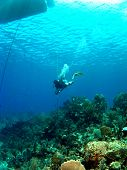 Dive Master underneath the Boat in Cayman Brac poster