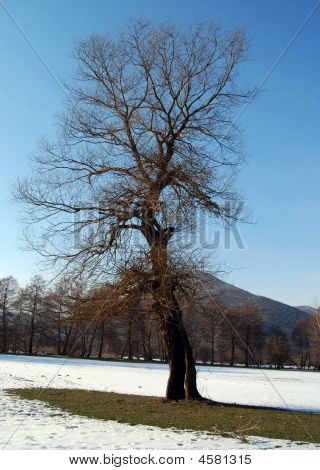 Image Of A Small Tree In Field