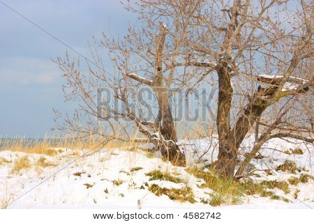 A winter scene of a tree on teh sanddunes of Jean Klock park Michigan poster