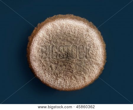 a mold colony on an agar plate (aspergillus niger) poster